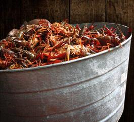 2010 Crawfish Boil